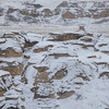 Hoodoos Coverd With Snow