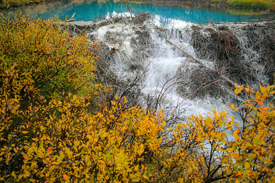Beaver Dam in Sulphur Spring