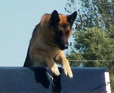 9/04 - O. G. Bierstadt Schutzhund Trial