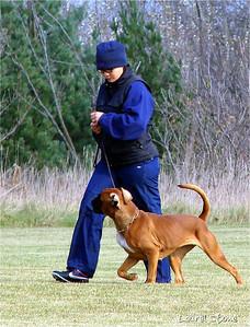 11/07 - O. G. Bierstadt Schutzhund Trial