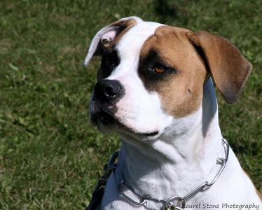 10/08 - O. G. Bierstadt Schutzhund Trial