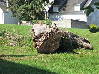 Audièrne: Vollständige Baumvernichtung auf einem Privatgrundstück