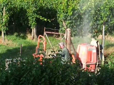 Hier wird ein Gemisch aus Kalk und anderen Stoffen aus einer Maschine in die Rebpflanzen geblasen. Netter Feinstaub.