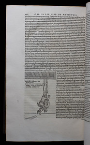 illustrations, 16th century