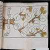 "Hand-coloured table.  <br><br> <b>Author:</b> William Manderston <br> <b>Title:</b><i> Bipartitum in morali philosophia opusculum </i> (Paris, 1523)<br> <b>Shelfmark:</b> K.15.30  <a href=""http://idiscover.lib.cam.ac.uk/primo-explore/fulldisplay?docid=44CAM_ALMA21392189130003606&amp;context=L&amp;vid=44CAM_PROD&amp;search_scope=SCOP_QUE&amp;tab=cam_lib_coll&amp;lang=en_US%20""> (catalogue record)</a>"