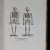 Front and rear views of human skeleton
