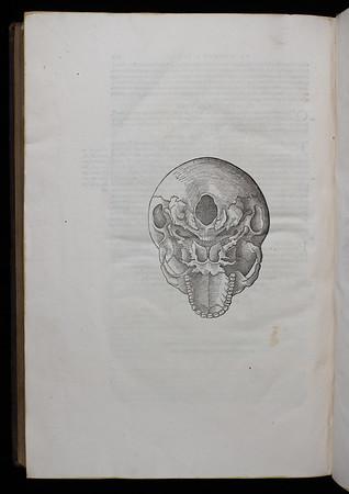 Bottom view of human skull