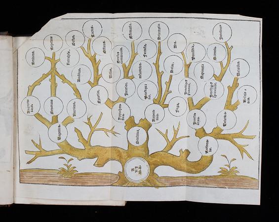 Genealogical table