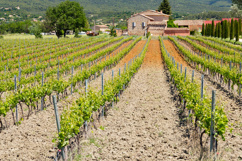 Luberon Vineyard