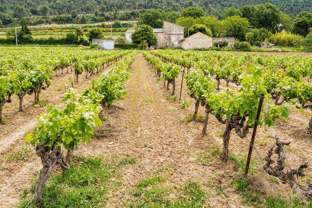 Cotes du Rhone Vineyard