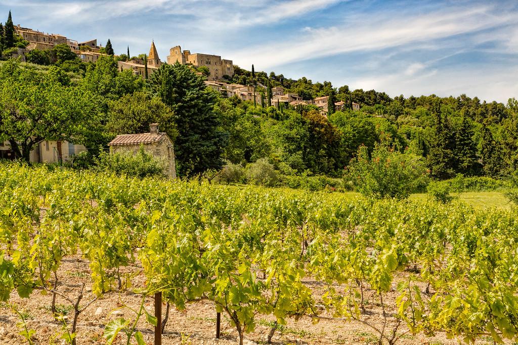 Vineyard Near Suzette