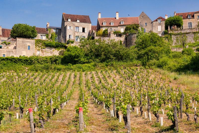 Vineard Near Vizelay