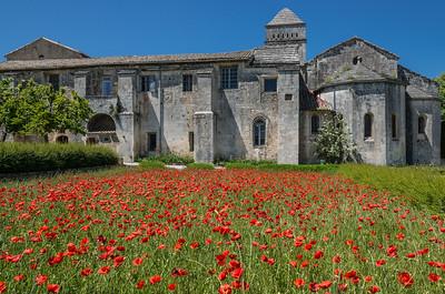 Poppies - St. Paul de Mausole Monastery - St. Remy de Provence
