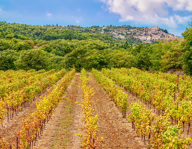 A French vineyard in the Luberon region of Provence, and the quaint village of Lacoste perched on a hillside in the background.