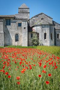 Poppies - St. Paul de Mausole Monastery - St. Remy