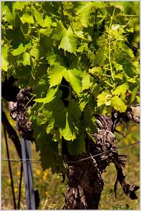 Solar powered vines.