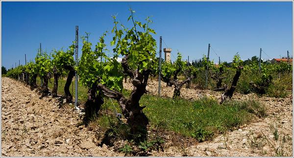 Shortcut through the vineyard.