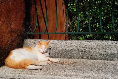 A sleeping cat catches no rat.