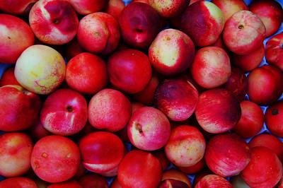 Peaches_D3S6958