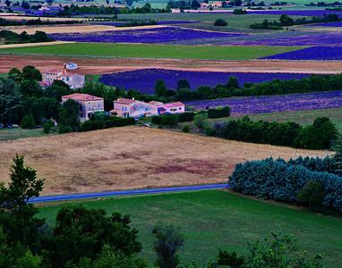 Lavender fields of Sault