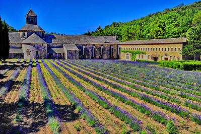 Abbaye de Senanque near Gordes