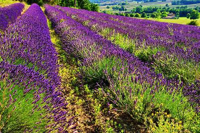 Rows of lavender below Sault