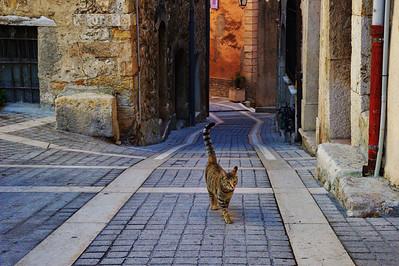 LeBroc_cat_n_street_LAN2636_1