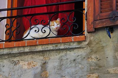 LeBroc_Cat_N_Window_LAN2619