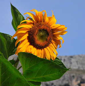 One resident had this sunflower to decorate his front door.