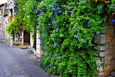 Wall_O_Flowers_D3S3585