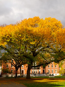 Autumn in Brown University