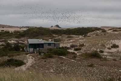 Fowler dune shack.