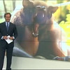 La población libre del Nóctulo del Zoo en la Televisión