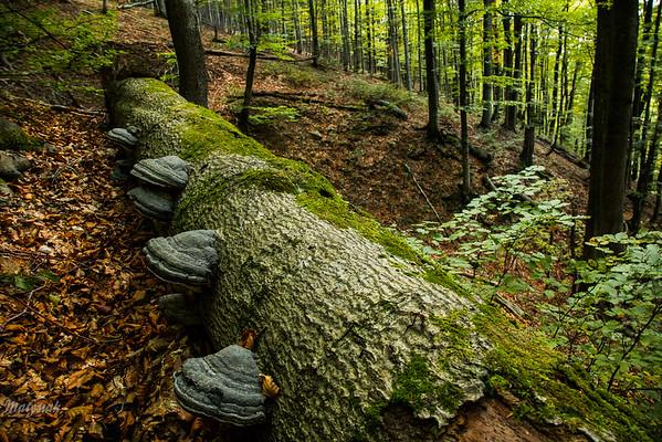 Buczyna pod Tarnicą, Bieszczady wrzesień 2017 ©Mateusz Matysiak