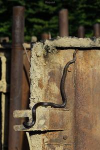 Wąż Eskulapa (Zamenis longissimus) wpełzający na wrota retortowe Bieszczady ©Mateusz Matysiak