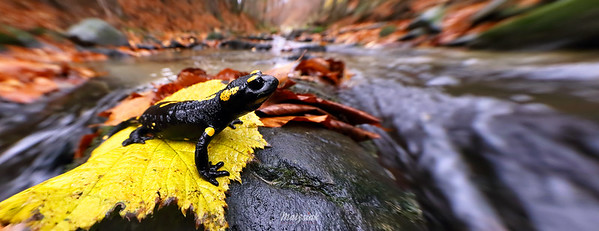 Smok na potoku