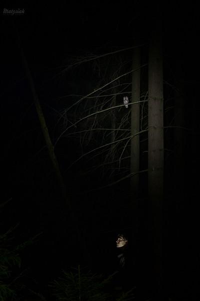 Noc, człowiek i sowa