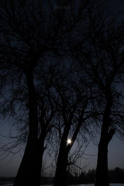 Księżyc w gruszach
