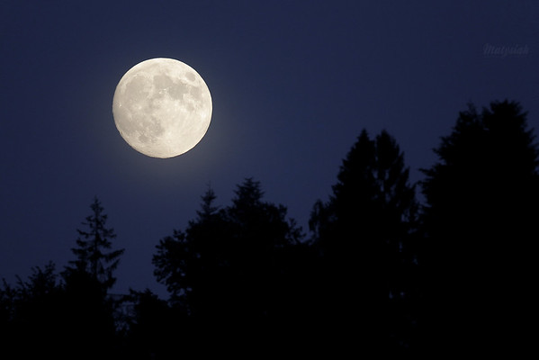 Srebrny glob nad lasem