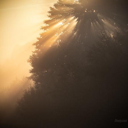 Efektowne rozproszenie promieni wschodzącego Słońca w koronie starej olszy Dolina Pisi Gągoliny ©Mateusz Matysiak
