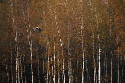 Jesienny patrol