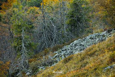 Bieszczady, rumowisko skalne w masywie Halicza ©Mateusz Matysiak