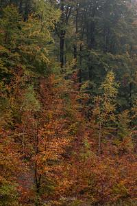 Jesienna buczyna Krywe, Bieszczady ©Mateusz Matysiak