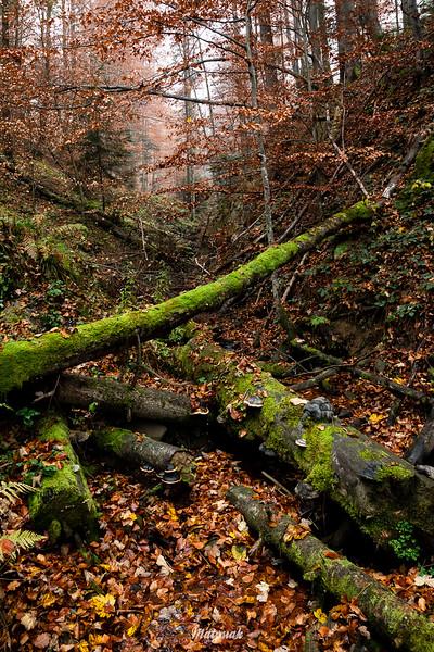 W jesiennym jarze Bieszczady ©Mateusz Matysiak