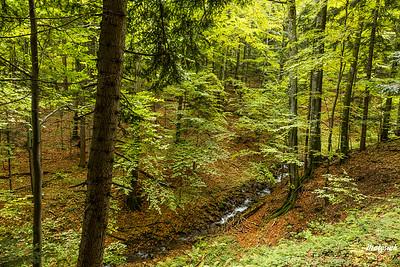 Las nad Suchą Rzeką