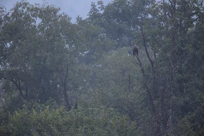 W bieszczadzkim lesie deszczowym