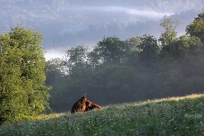 Poranek w dolinie