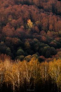 Kolory kwietniowego lasu