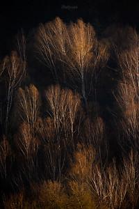 Górska brzezina wiosną Bieszczady ©Mateusz Matysiak