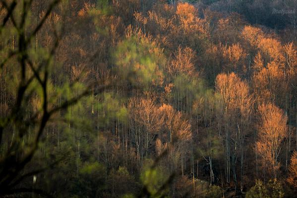 Wiosenny las Otryt, Bieszczady ©Mateusz Matysiak